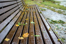 Wet Wooden Bench In The Park O...
