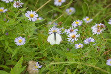 A Large White Butterfly On Flowers