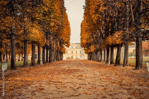 Poster Paris Alley of Luxembourg Gardens, Jardin du Luxembourg in Paris France, covered with orange autumn leaves on an Autumn day