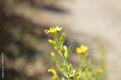Fototapety, obrazy: Flowers and insects, Jijel, Algeria, Africa