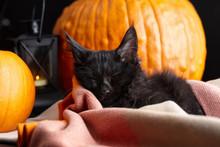 Black Maine Coon Cat Sleeping ...