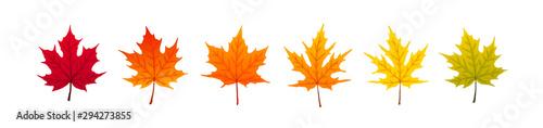 Fotografie, Obraz autumn leaves collection