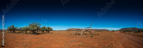 Dead tree, dirt track and mountains in the desert of outback Australia Canvas Print