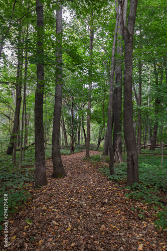 path with trees in the forest