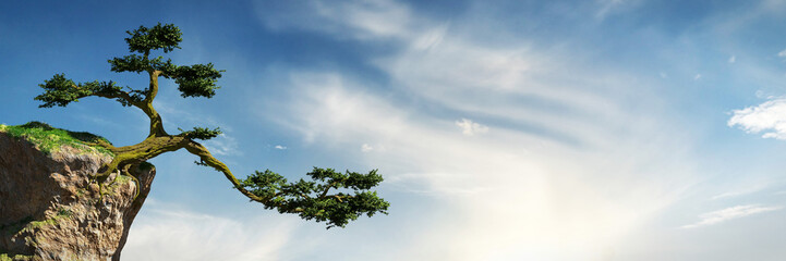 old tree growing on a rock in front of the sky, fantasy landscape