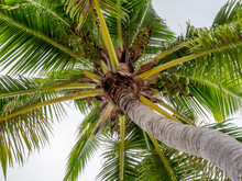 Looking Up At A Palm Tree