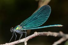 Dragonfly On Kolpa/Kupa River