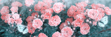 Mysterious Spring Floral Banner With Blooming Rose Flowers And Two Butterflies In Morning Fog And Haze In Soft Pastel Colors