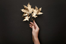 Cropped View Of Woman Holding Golden Maple Leaves On Black Background