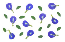 Butterfly Pea Flower With Gree...