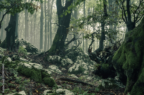 Foto auf Gartenposter Dunkelgrau Mysterious foggy forest.