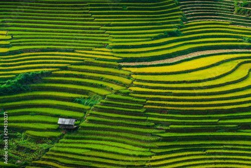 Autocollant pour porte Les champs de riz Landscape rice fields on terraced of Mu Cang Chai, YenBai, Vietnam