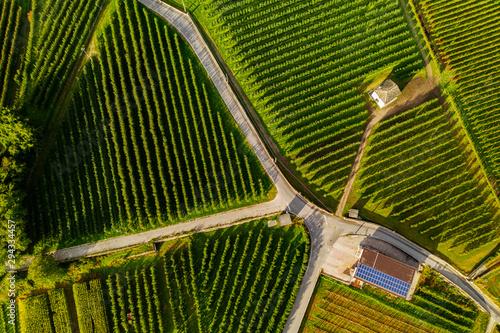 vista aerea di vigneti con fattoria con Wallpaper Mural