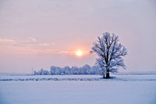 Winter Landscape. Lonely Tree ...