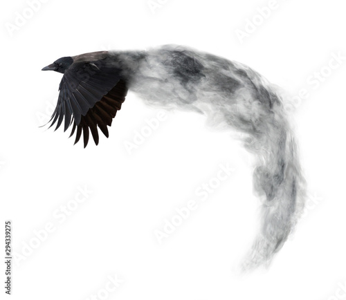 dark crow flying from grey smoke isolated on white Canvas Print