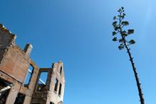 Alcatraz Warden House Ruins An...