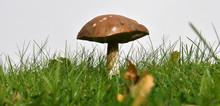 Mushroom In Grass - White Back...
