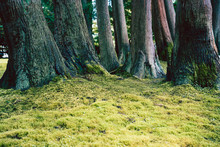 A Green Undergrowth In The Jap...
