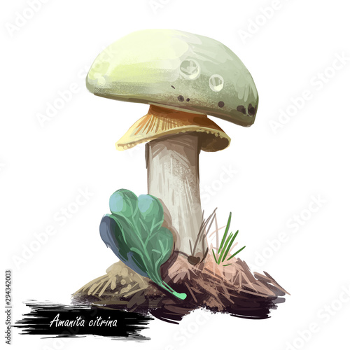 Photo Amanita citrina or mappa, false death cap mushroom closeup digital art illustration