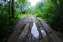 Dirty Road In Forest