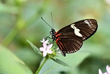 Butterfly On Flower, Photo As ...