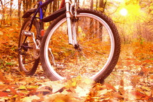 Mountain Biking In Autumn Forest On Background Of Beautiful Yellow Sunset Among Yellow Autumn Trees And Yellow Autumn Leaves
