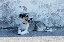 Cute Little Dog Over Gray Wall Background. Dog Outdoors.