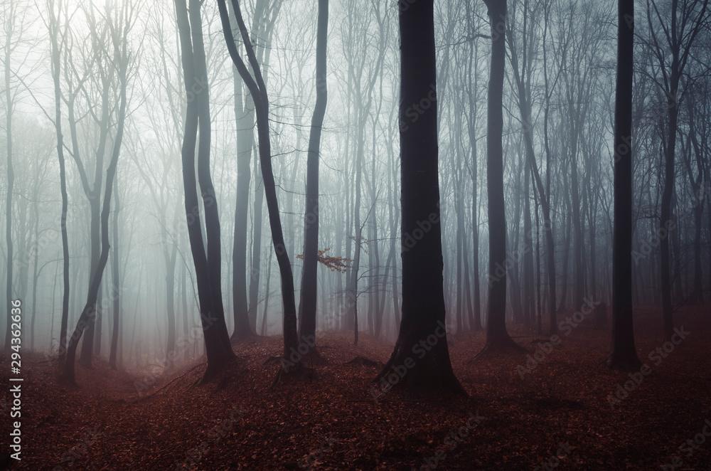 Fototapeta dark mysterious woods landscape, misty forest scenery