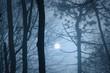 Leinwanddruck Bild moon on the night sky seen from mysterious forest