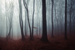 Leinwanddruck Bild dark mysterious woods landscape, misty forest scenery