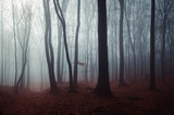dark mysterious woods landscape, misty forest scenery