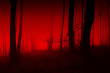 Horror Forest Scene, Red Light In Scary Night Landscape
