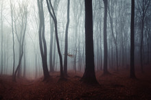 Dark Mysterious Woods Landscap...