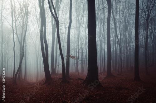 Pinturas sobre lienzo  dark mysterious woods landscape, misty forest scenery