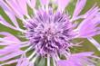 canvas print picture - macro fiore