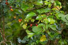 Vibrant Autumn Berries Amidst ...