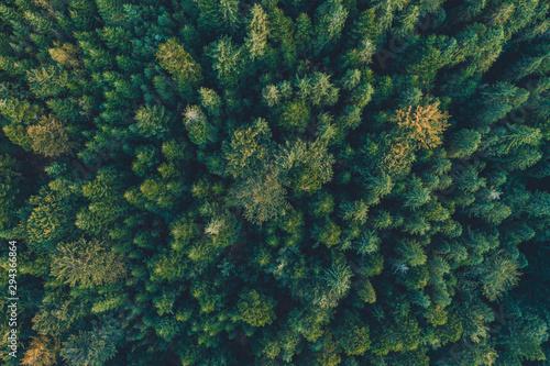 Photo sur Toile Route dans la forêt Top view of centuries old Carpathian forest trees, beautiful texture.
