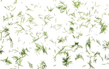 Fresh Chopped, Cut Green Dill Isolated On White Background, Top View