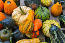 Colorful Mixed Gourds And Squash In Autumn On Farm