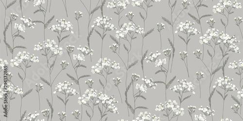Achillea millefolium. White, wildflowers. Medicinal plant. Wild flower. Botanical illustration.
