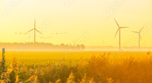 Poster Melon Reed in a rural landscape in sunlight below a blue sky at sunrise in autumn