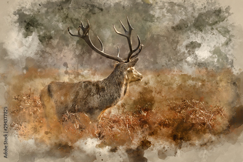 Digital watercolor painting of Stunning red deer stag Cervus Elaphus with majest Canvas Print