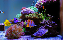 Beautiful Saltwater Coral Reef...