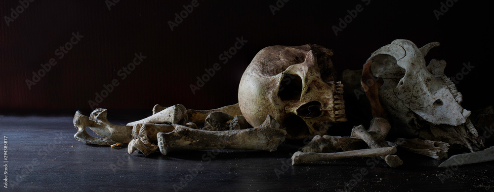 Fototapeta Skulls animal and human with pile of bone in dark background, last of life is death, Still life image and select focus.