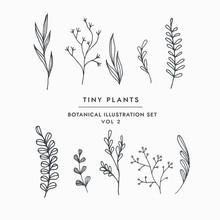 Tiny Leaves Plants Hand Drawn ...