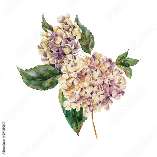 Leinwandbilder - Watercolor Vintage Floral Greeting Card with Blooming White Hydrangea, Watercolor botanical natural hydrangea Illustration