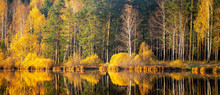 Panorama Of Autumn Forest On The River Bank In The Urals, Russia, October
