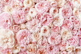 Fototapeta Kwiaty - Summer blossoming delicate rose blooming flowers festive background, pastel and soft bouquet floral card, selective focus, toned