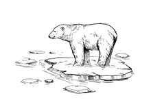 Sketch Of Polar Bear. Hand Drawn Illustration Converted To Vector