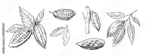 Sketch of cocoa plants Canvas-taulu